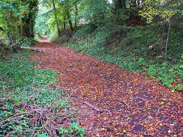 Footpath through woods, near Frampton Mansell - geograph.org.uk - 581638