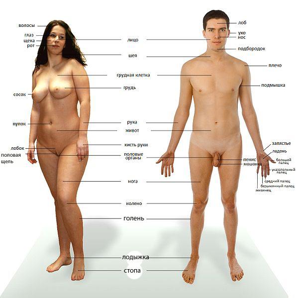 зоны тела