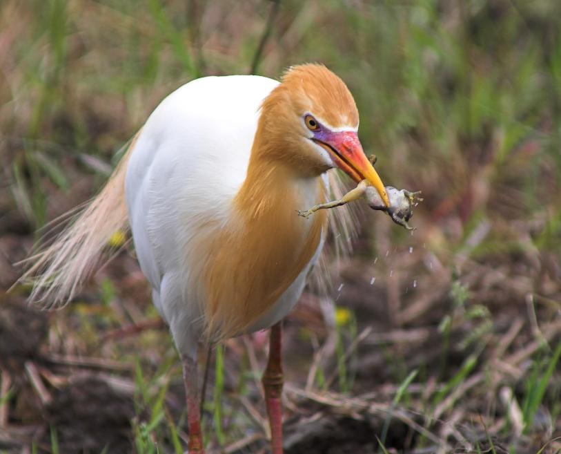 List Of Birds Of Botswana Wikipedia