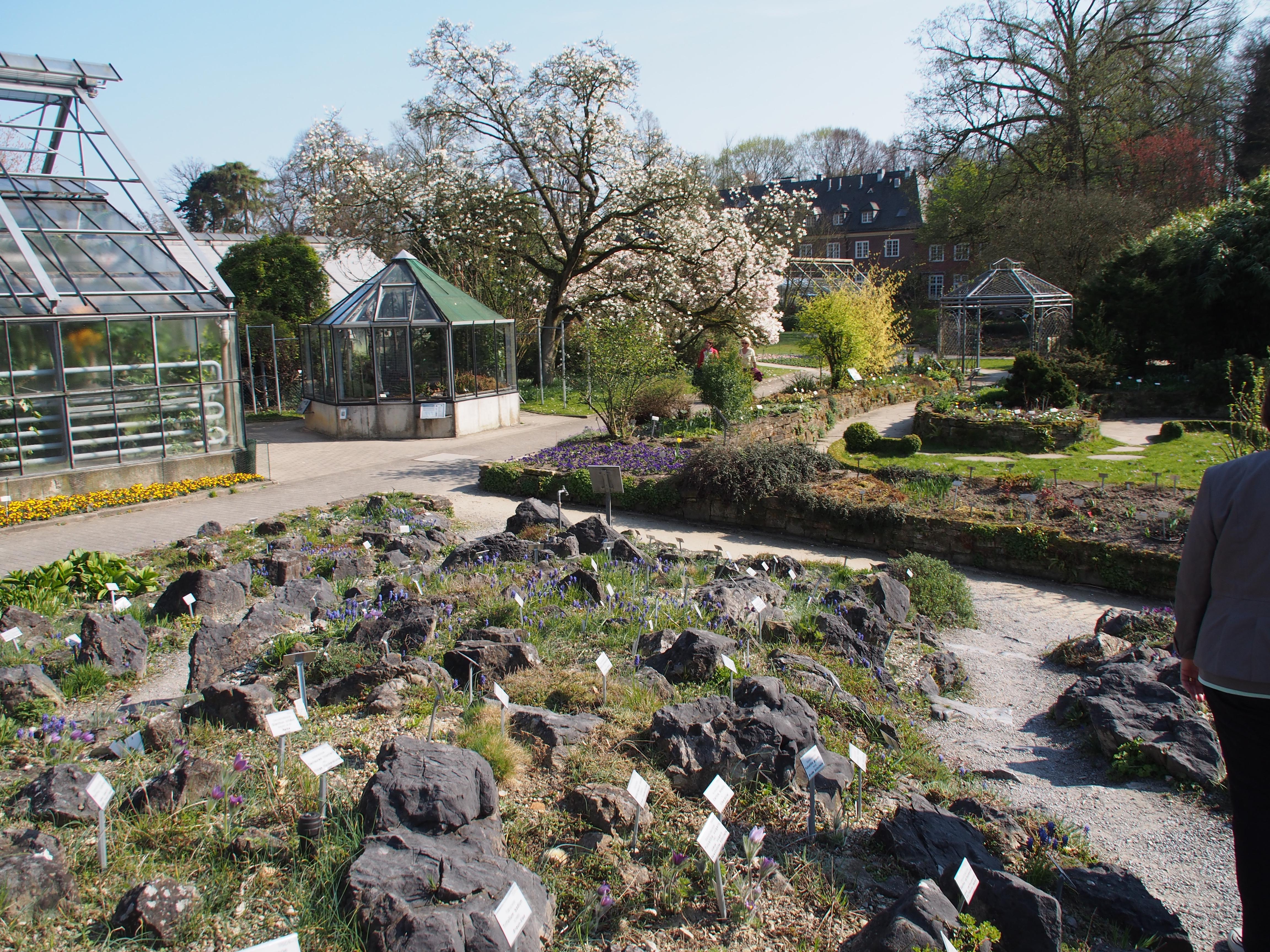 Garten Münster file münster schloss botanischer garten infoschilder jpg wikimedia