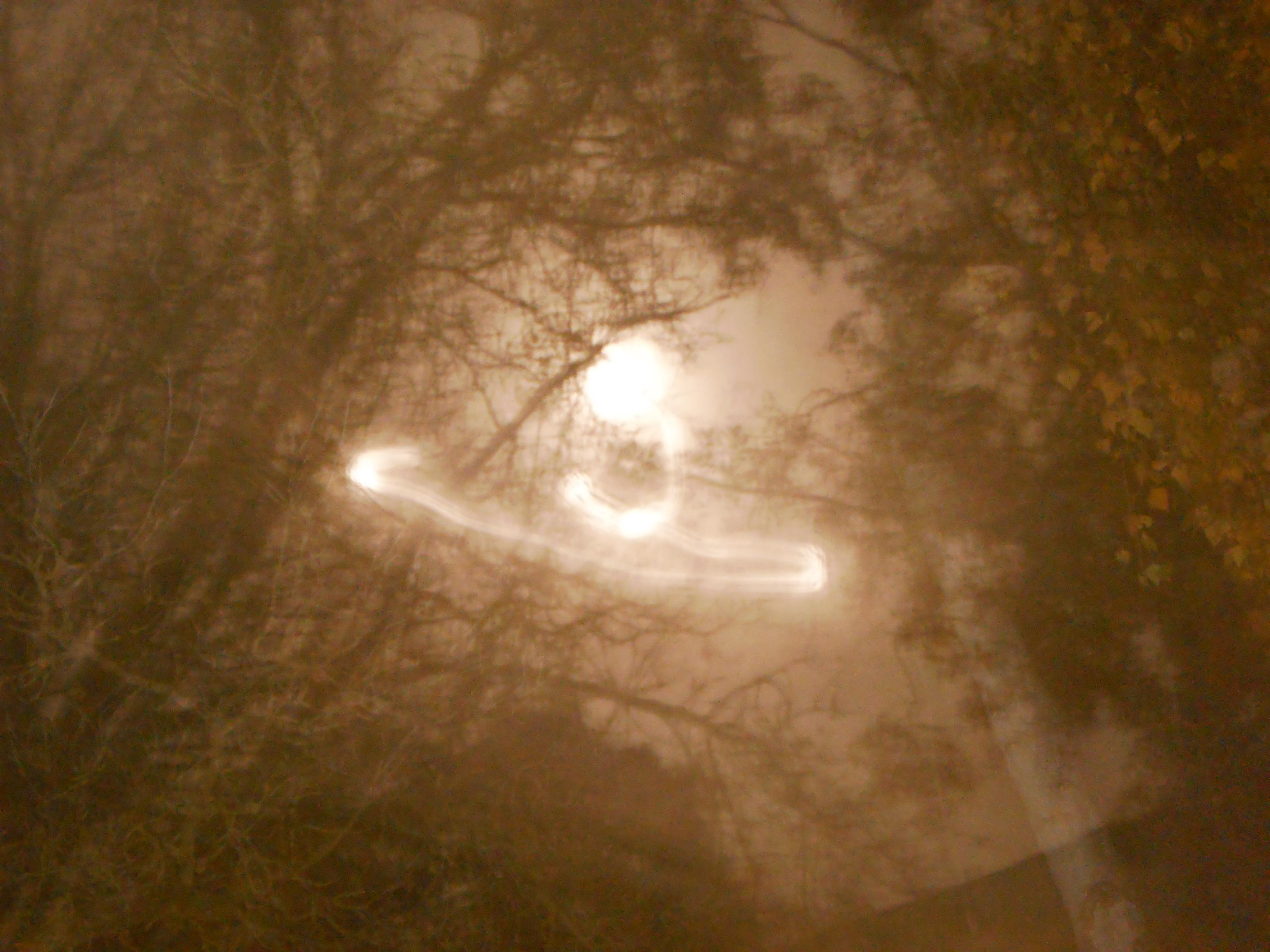 File Malen Mit Mondlicht In Kahlem Baum Bei Mitteleuropaischer