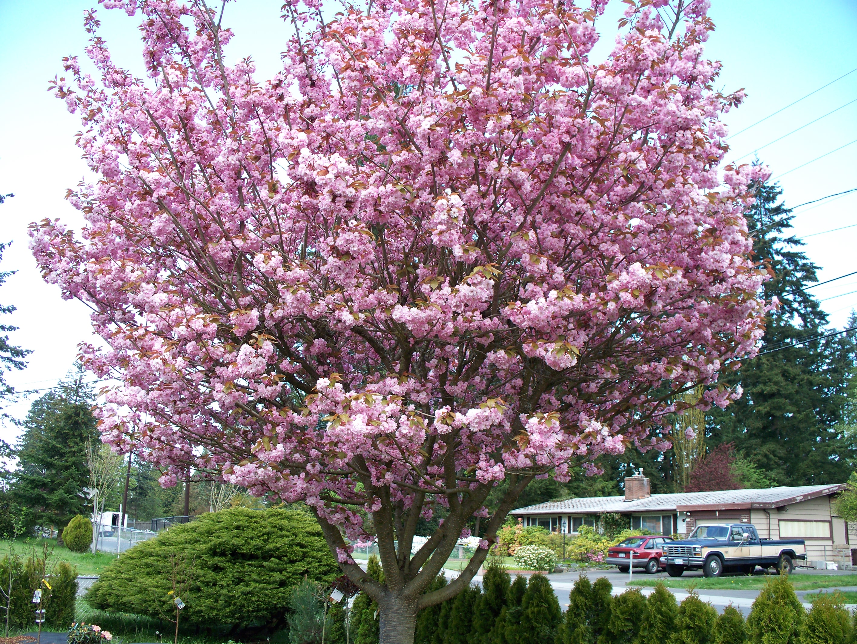 The 3 Best Flowering Trees For Parking Lot Islands