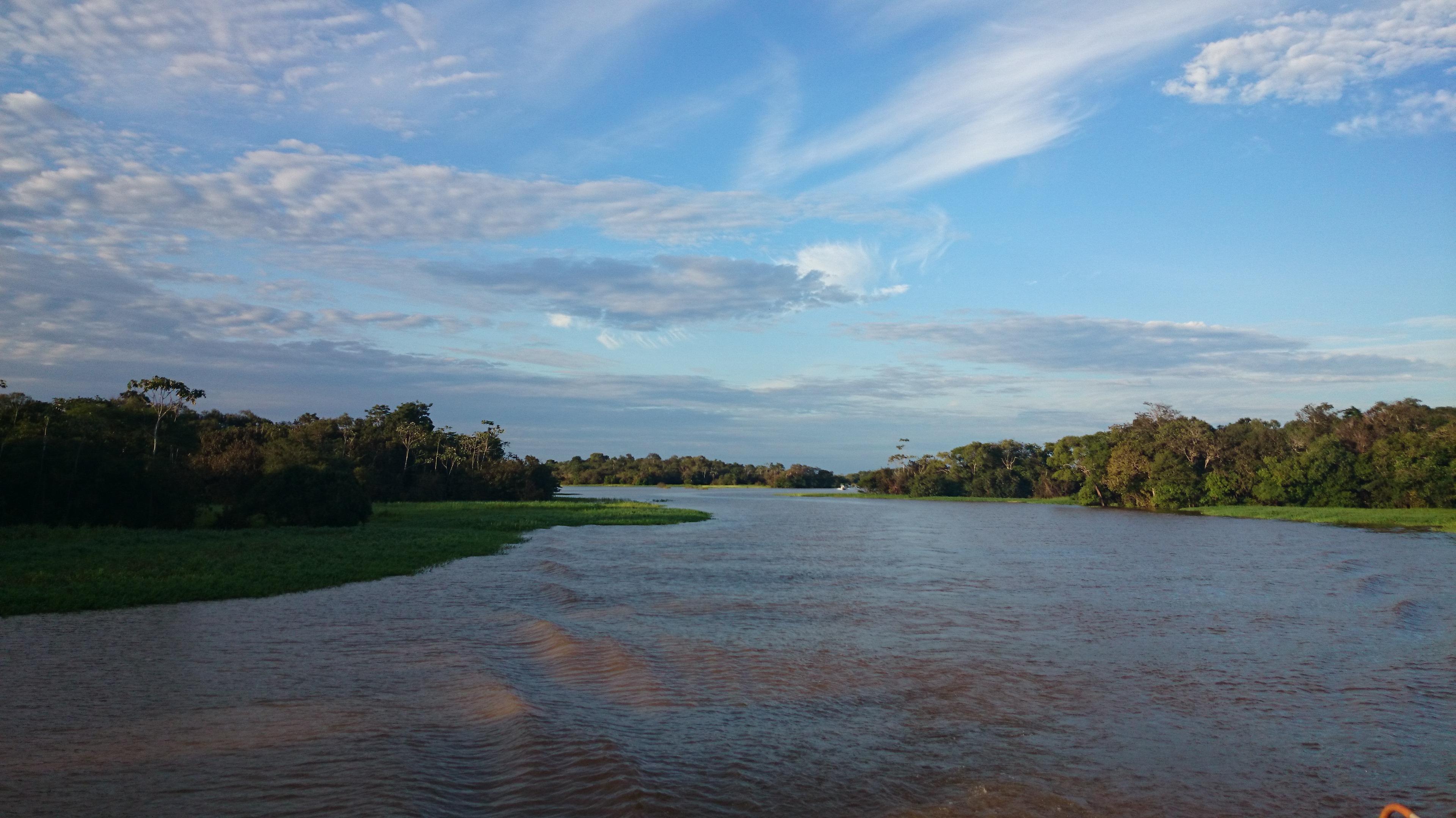 Anamã Amazonas fonte: upload.wikimedia.org