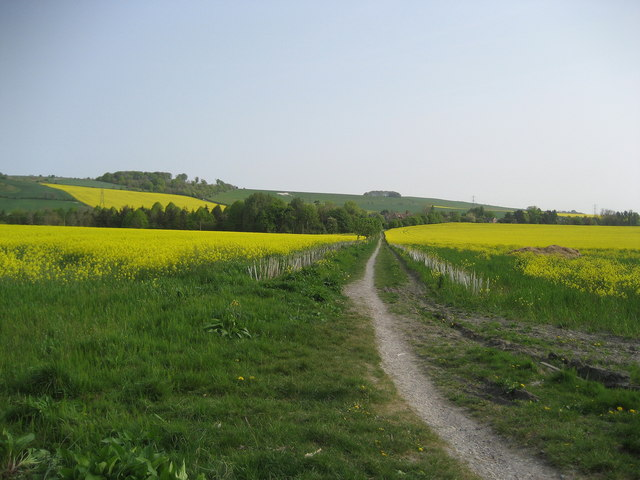 Path to Roundway - geograph.org.uk - 419081