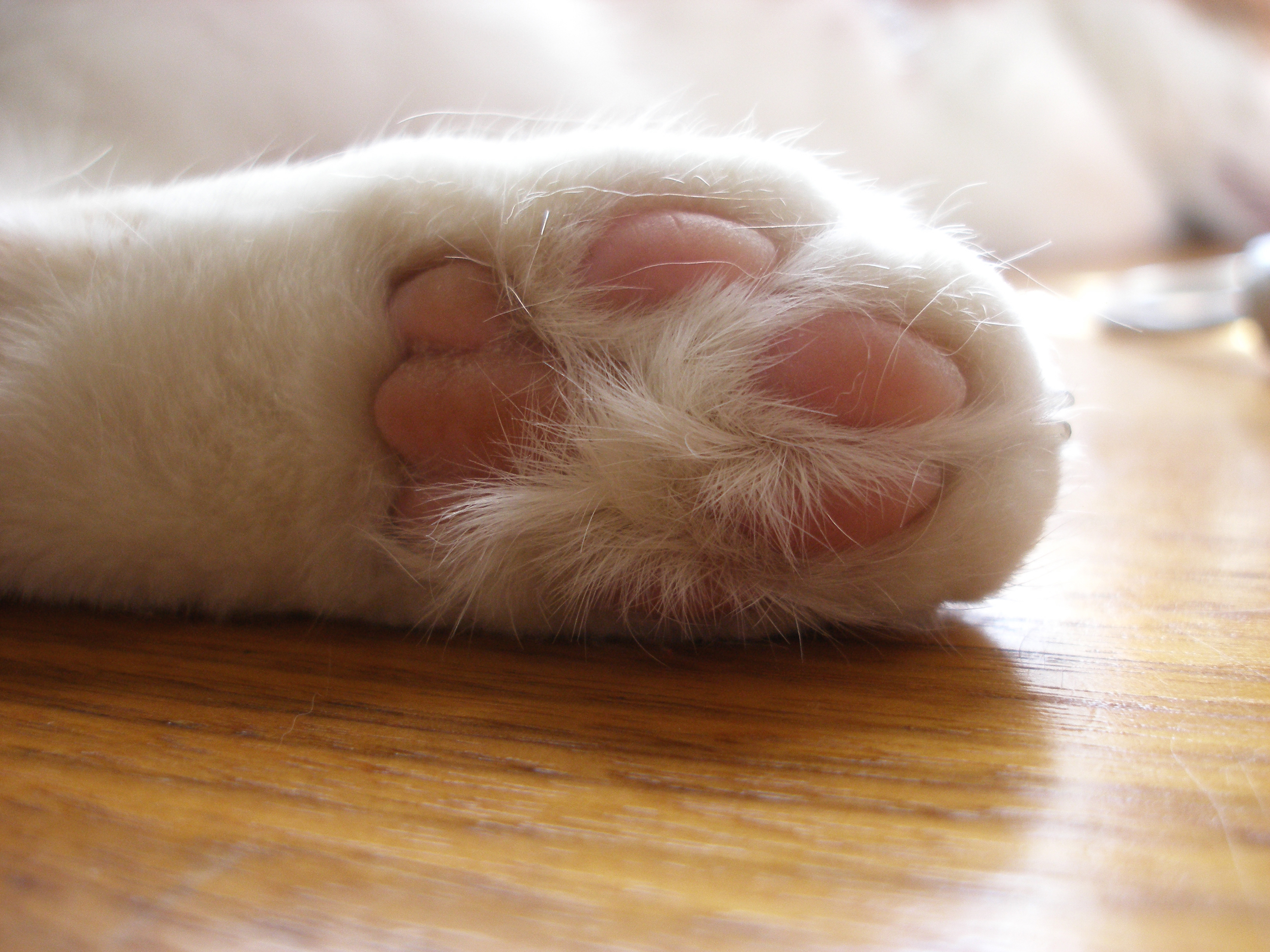 White Cat Paws Costume