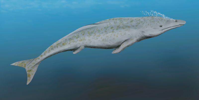 Vodný cicavec protocetus