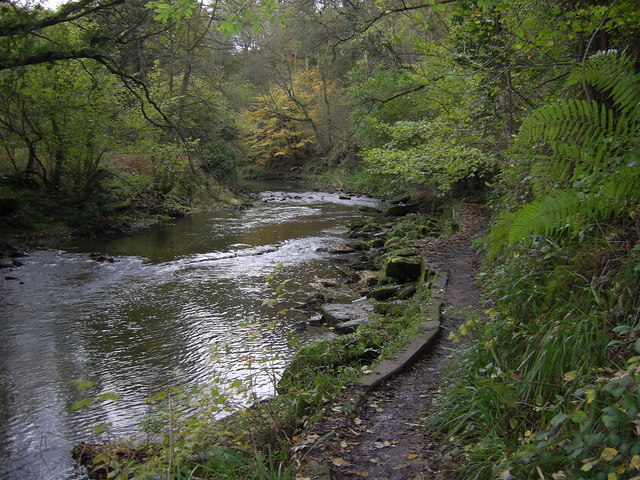 River Blyth Humford Woods - geograph.org.uk - 275395