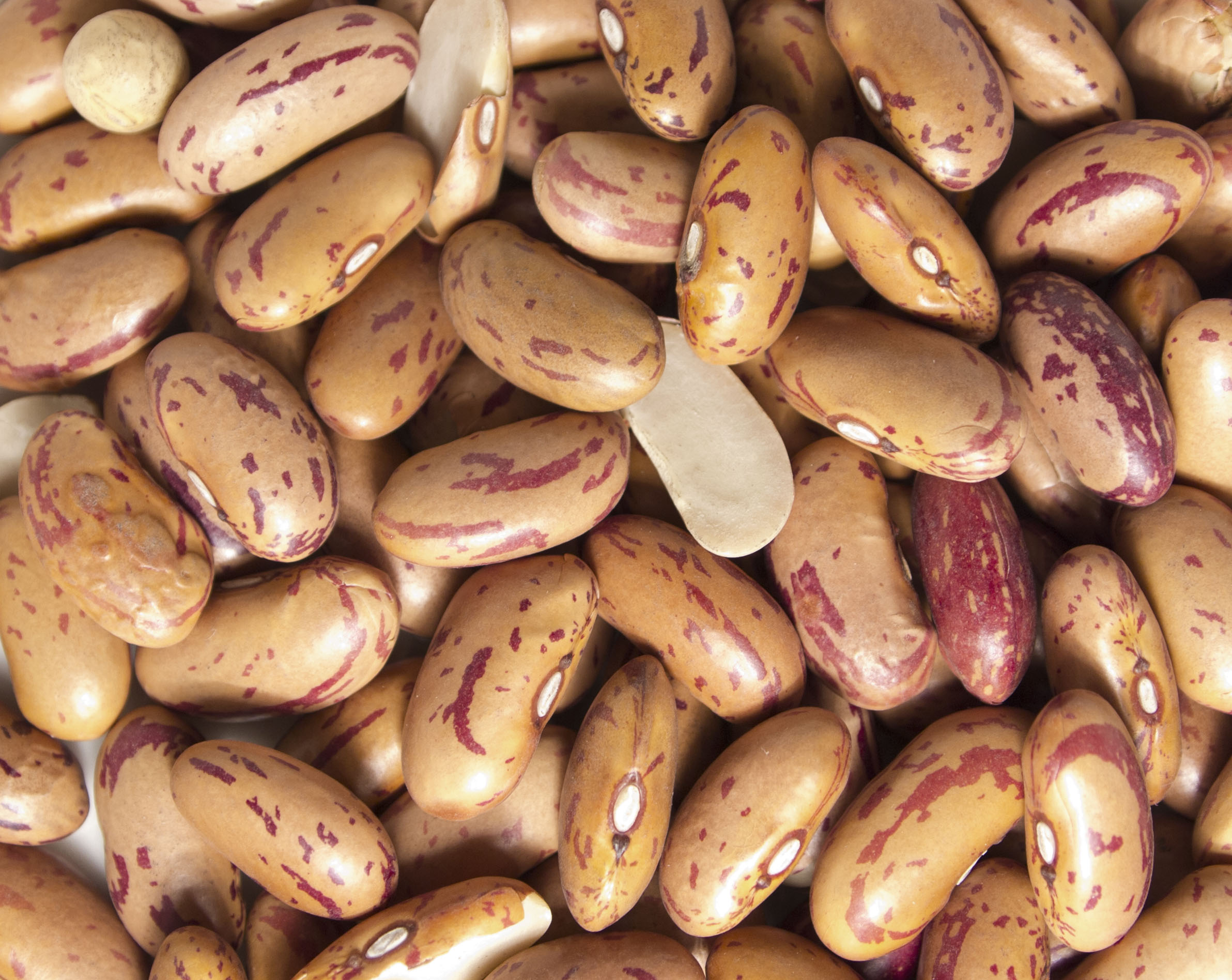 Rose cocoa beans