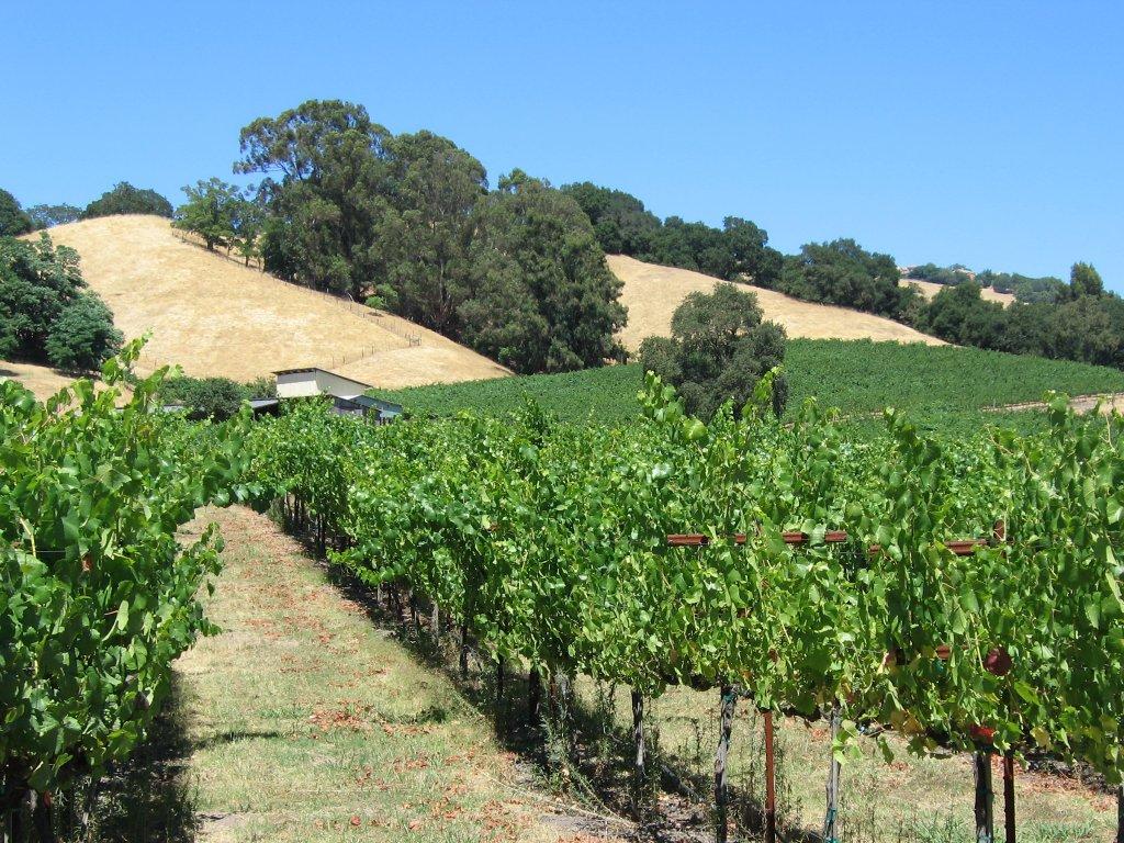 SR vineyard