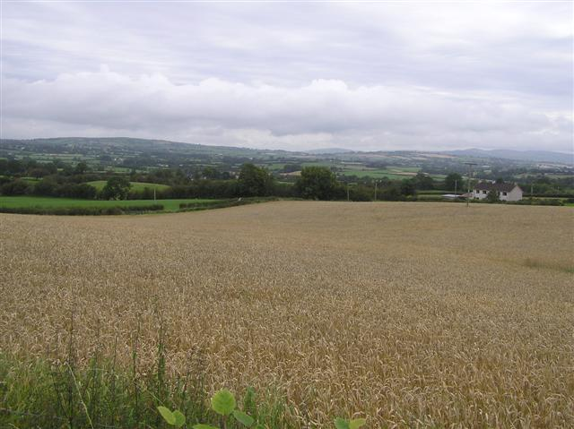 File:Whitehouse Townland - geograph.org.uk - 1460613.jpg