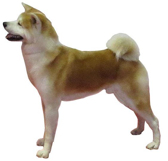 Hundefilm Hachiko