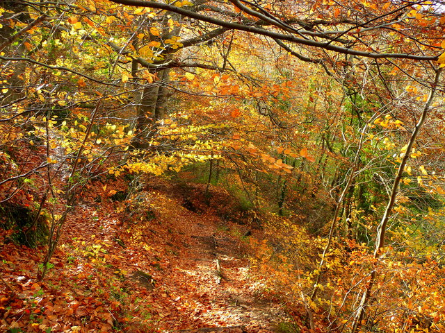 Autumn at Sirhowy Valley Country Park 1 - geograph.org.uk - 1041771