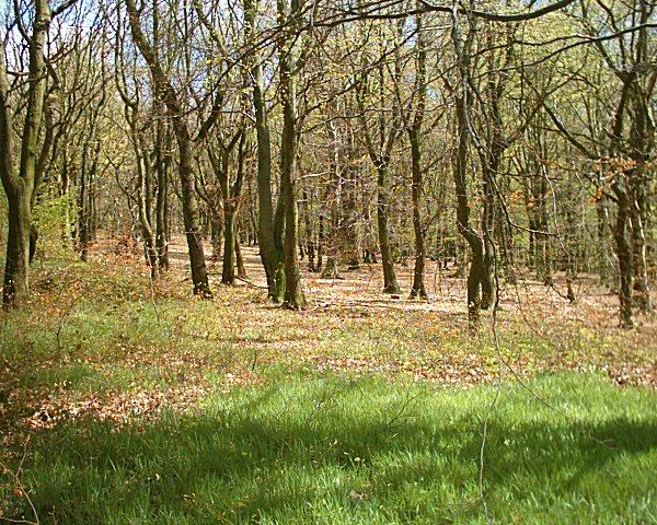 Woodlands Ring Road