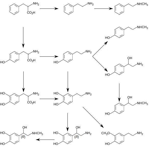 Beta Phenethylamine, Poor Man's speed? (my Analysis) - Drugs