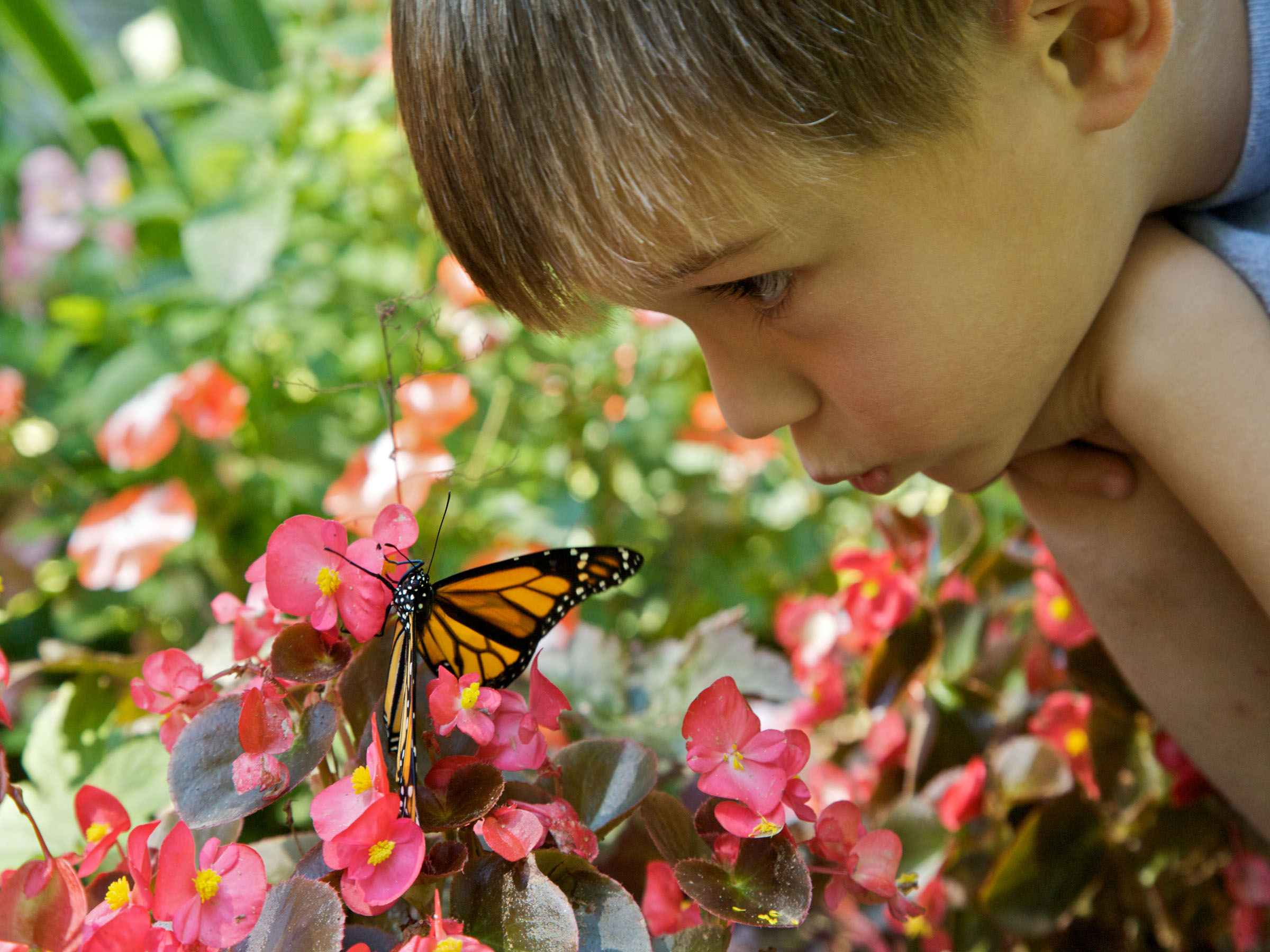 Children S Nature Centers In Massachusetts Within  Min Of Worcester