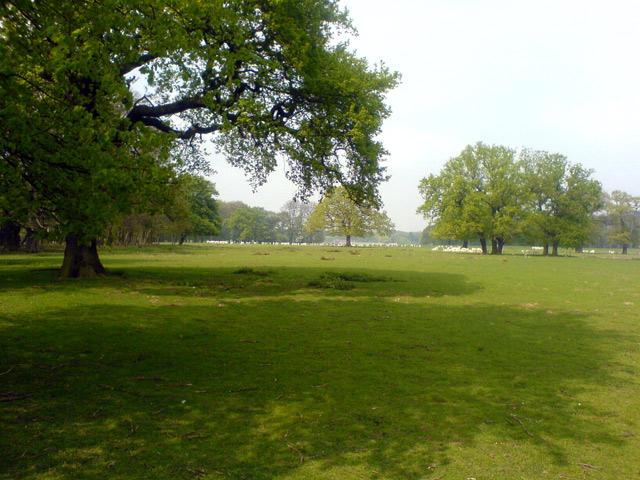 Deer Park, Welbeck Estate - geograph.org.uk - 476613