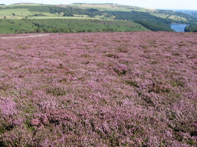 Emlin hillside towards Agden Reservoir - geograph.org.uk - 1449833