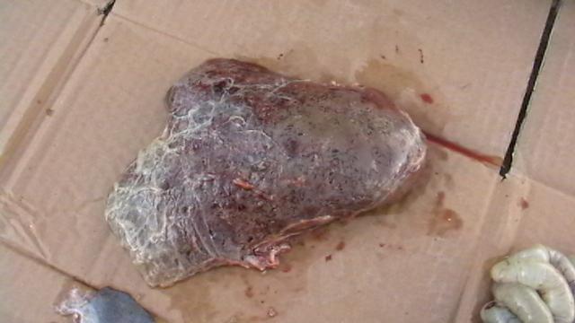 Játra ovce uhynulé na akutní motoličnatost