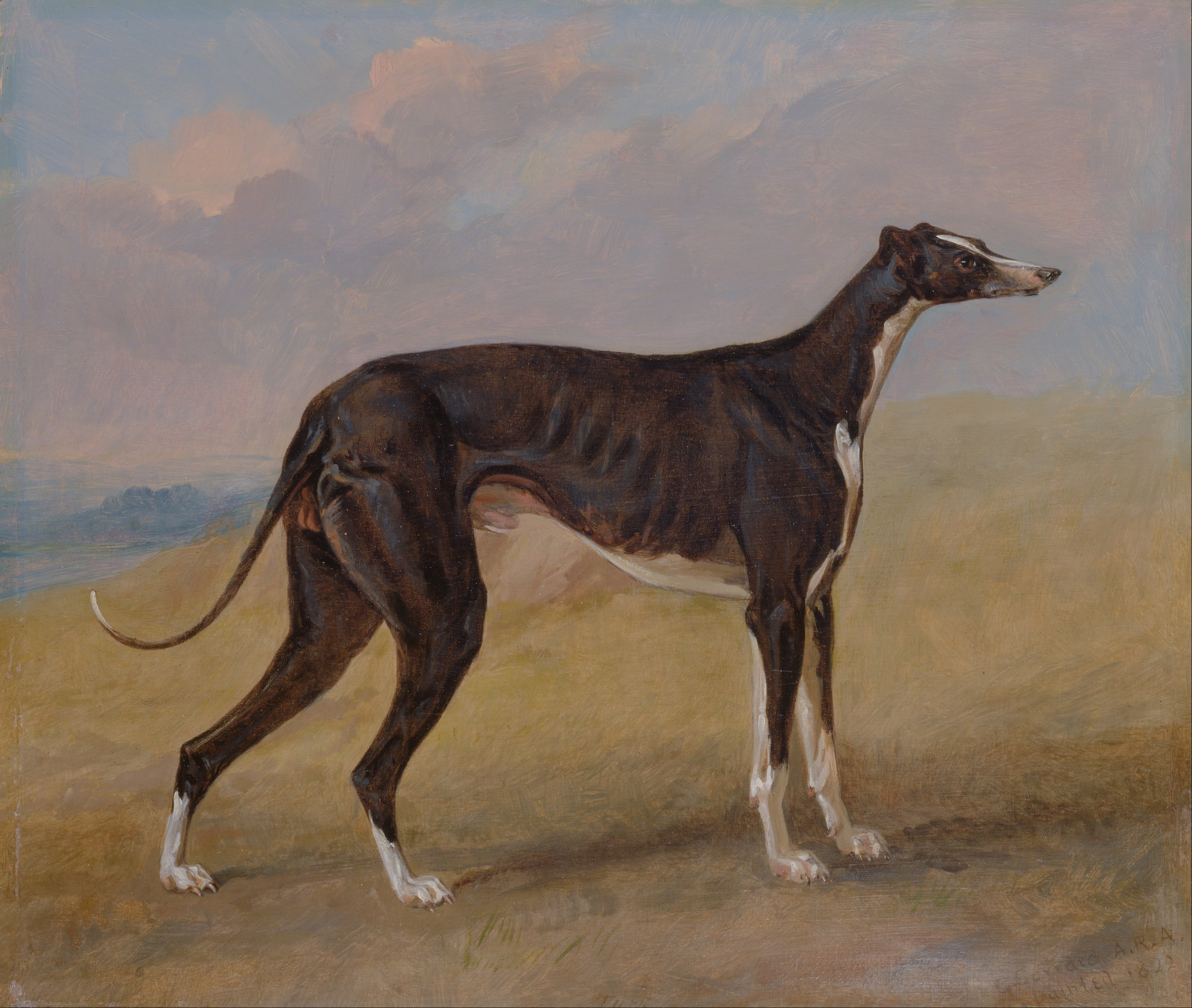 filegeorge garrard turk a greyhound the property of