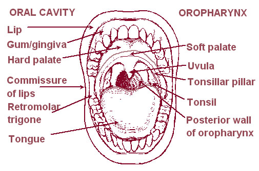 picture of oral cavity