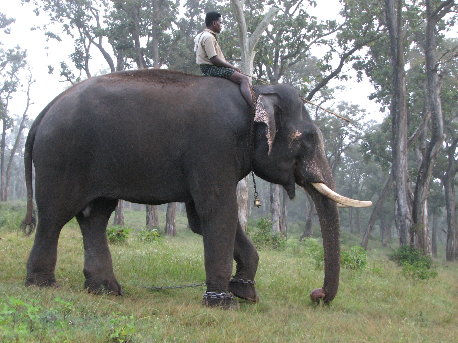 An Elephant inside Mathikettan Shola National Park