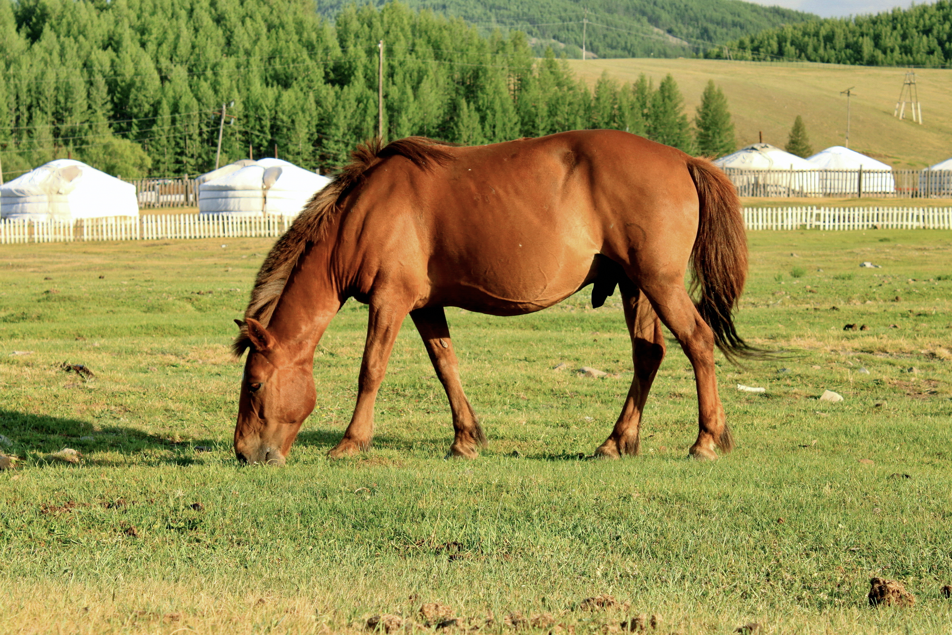 the relationship between mongols and their horses