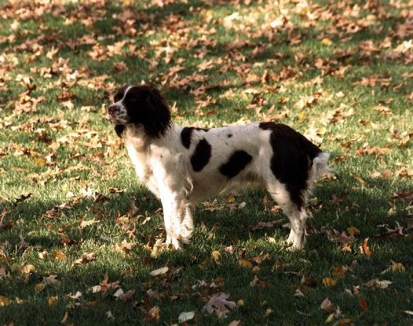 Millie Bush Dog Bark