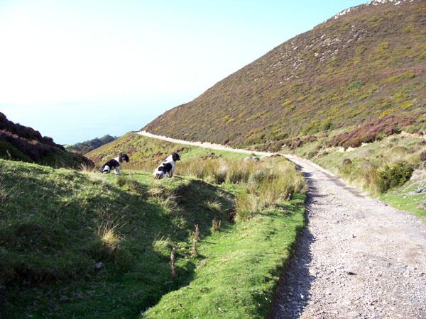 Mountain Lane - geograph.org.uk - 242543