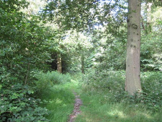 Oxhey Woods, London Loop long distance walk - geograph.org.uk - 1375416
