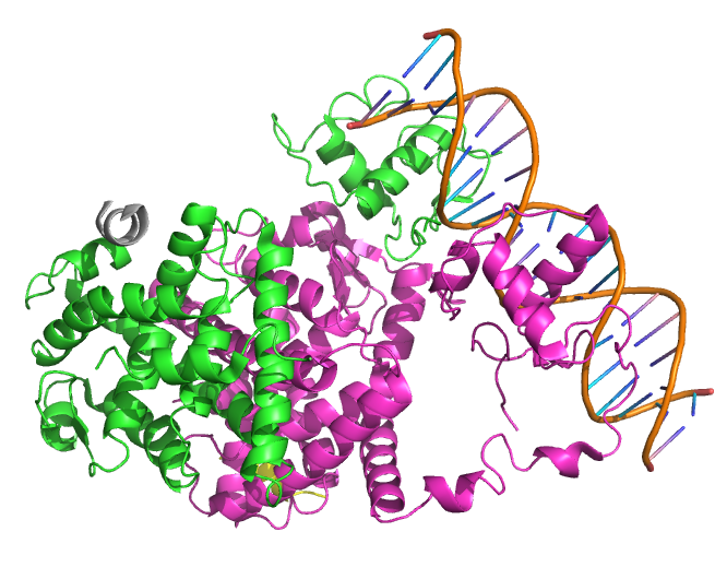 protein-coding gene in the species Homo sapiens