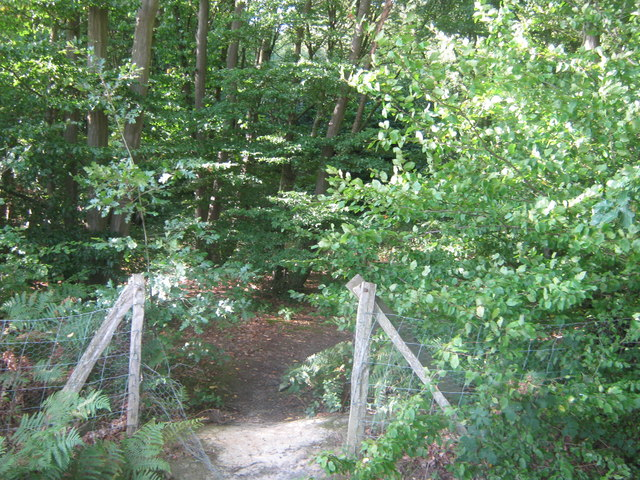 Path into Dering Wood - geograph.org.uk - 1428116
