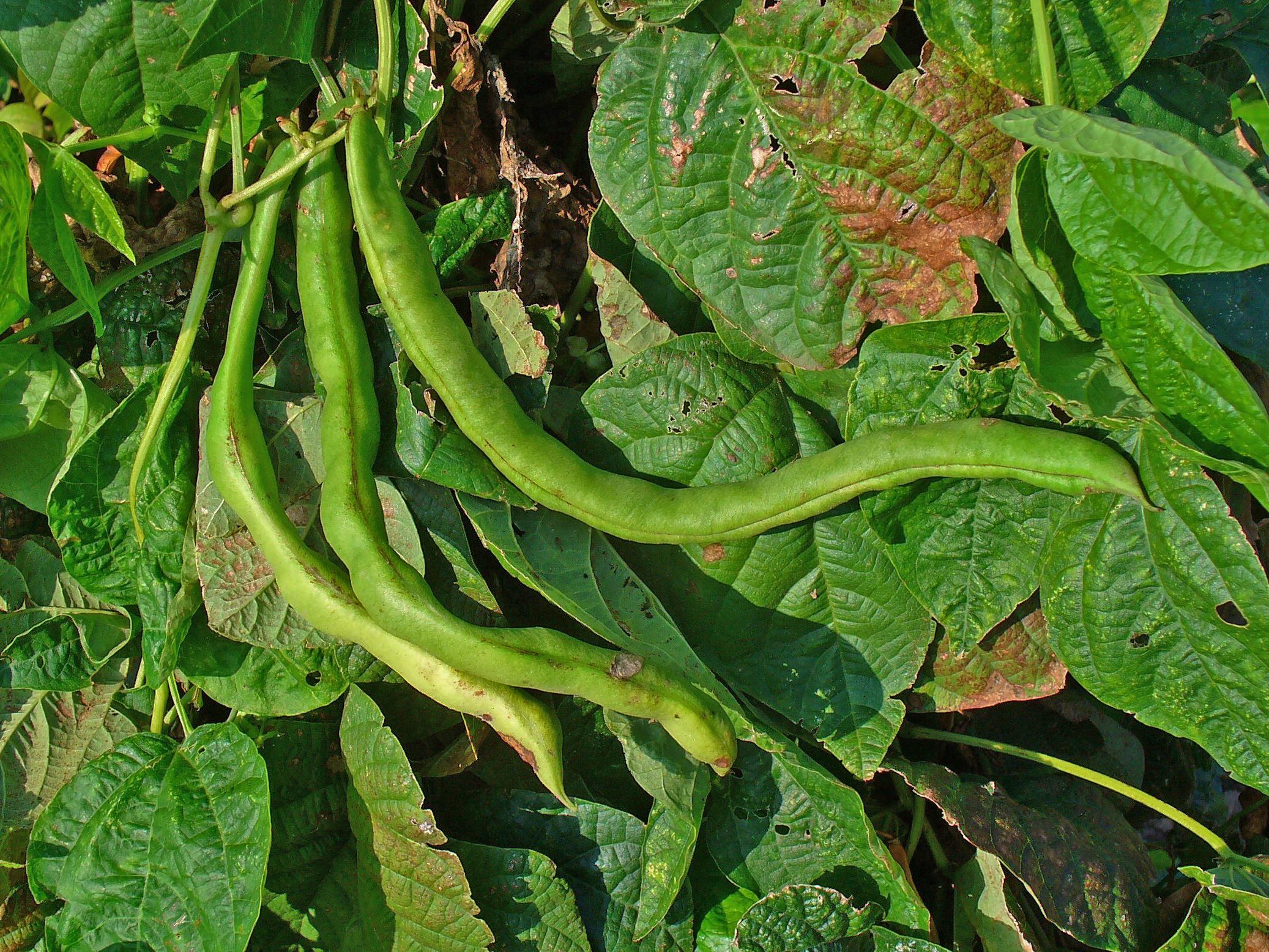 Black Beans And Rice Smitten Kitchen