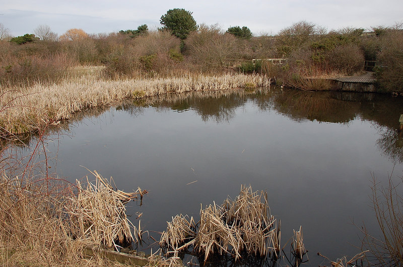 Pond at Wirral Country Park, Thurstaston - geograph.org.uk - 1737017