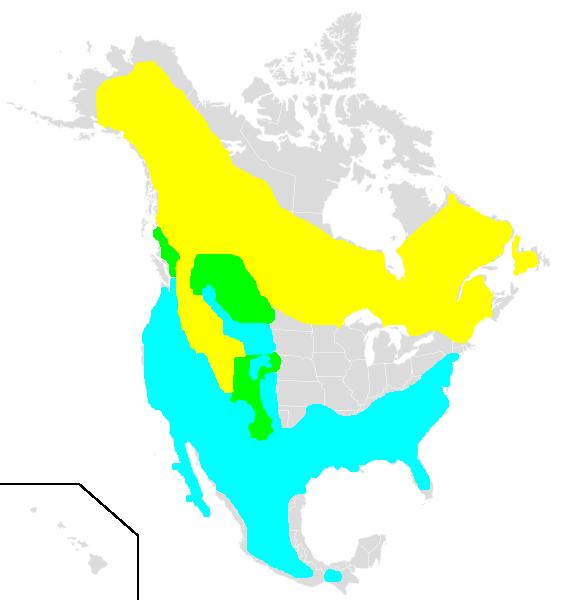 Regulus calendula range.png