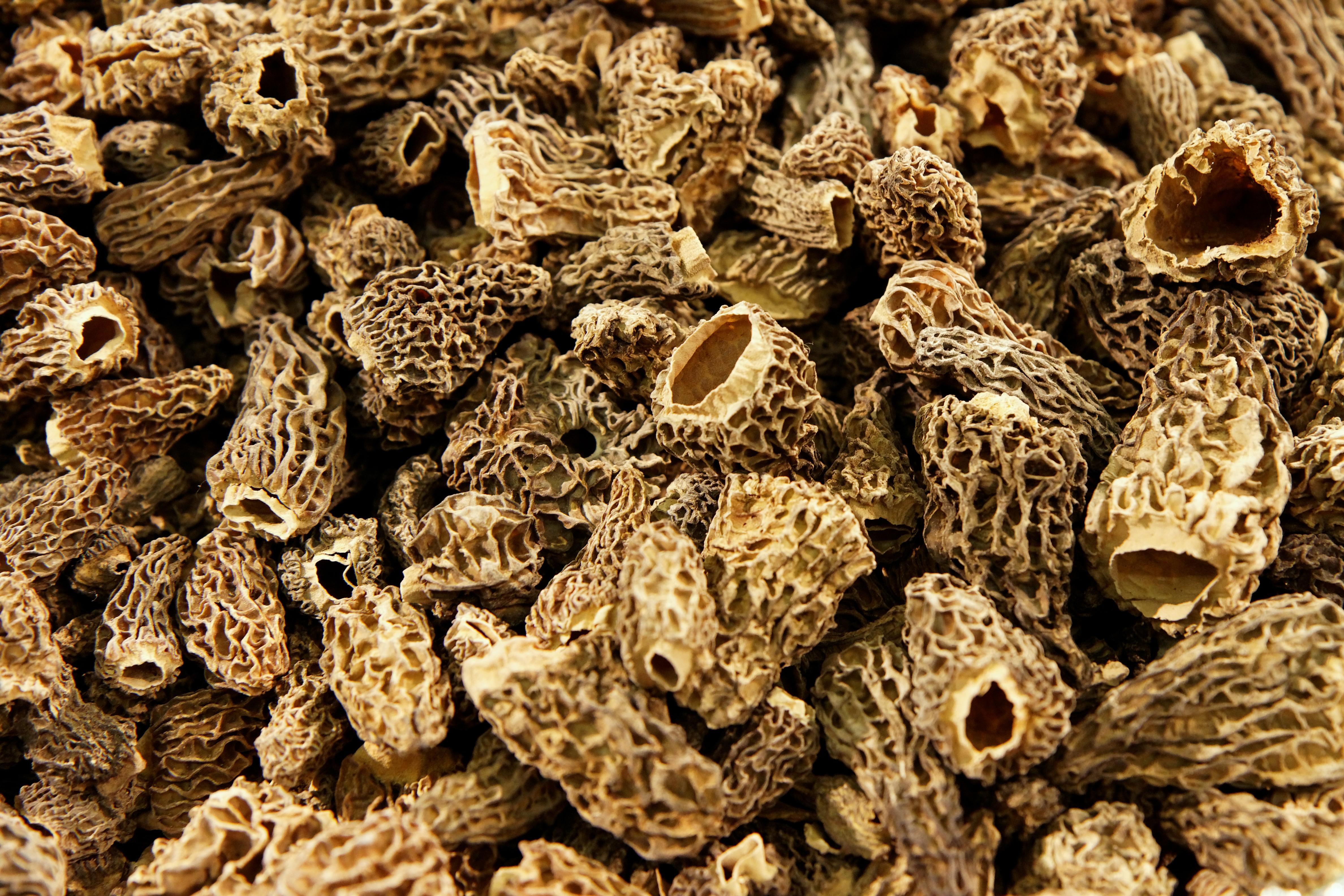 File salon de l 39 agriculture 2011 morilles s ch es wikimedia commons - Cuisiner morilles sechees ...