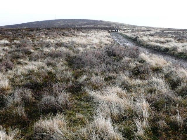 Western flank of Mynydd Twyn-glas - geograph.org.uk - 652155
