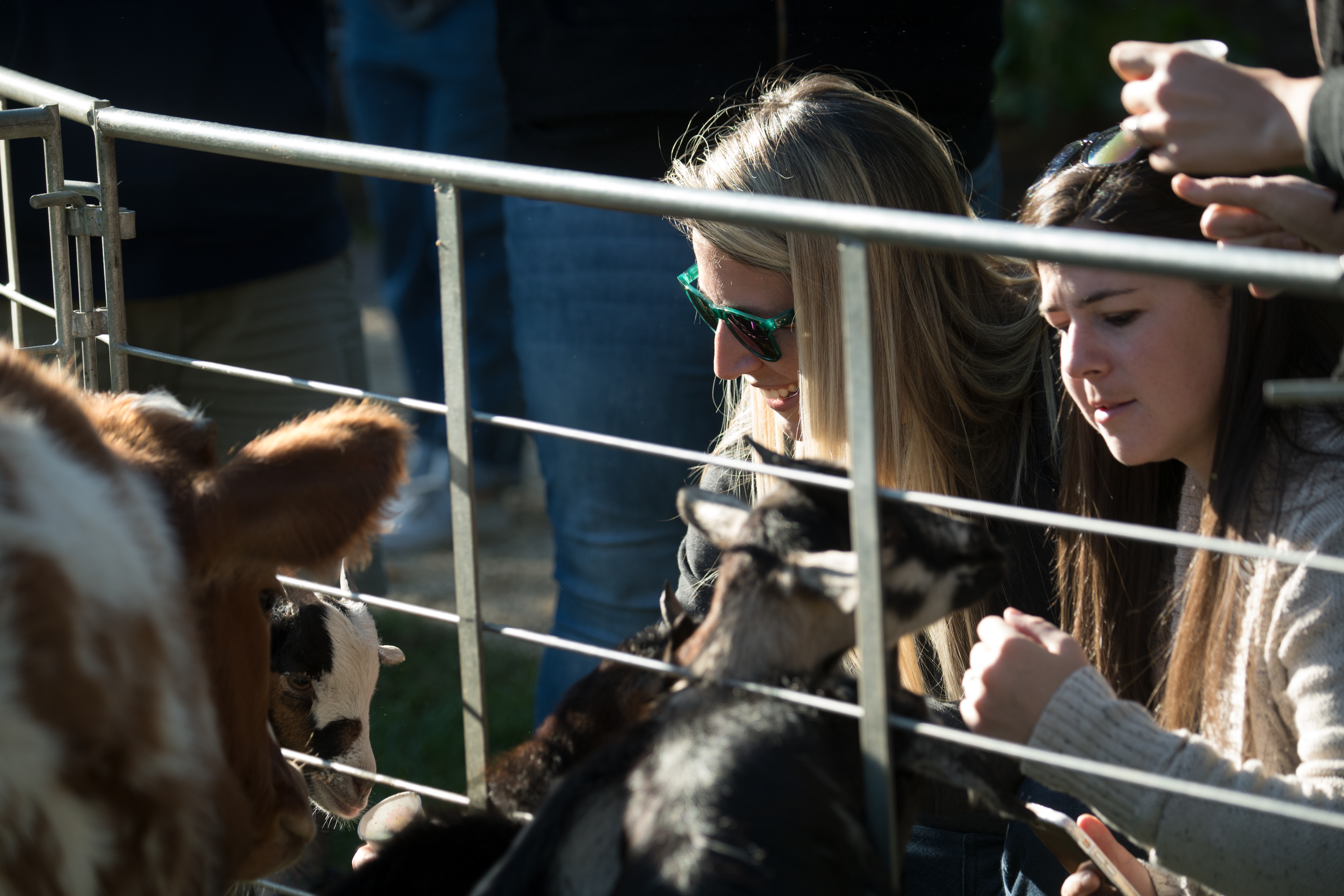 20171027-AMS-LSC-0115 (37358614004).jpg Young and small farm animals brought smiles to the downtown visitors and shoppers of the USDA Farmers