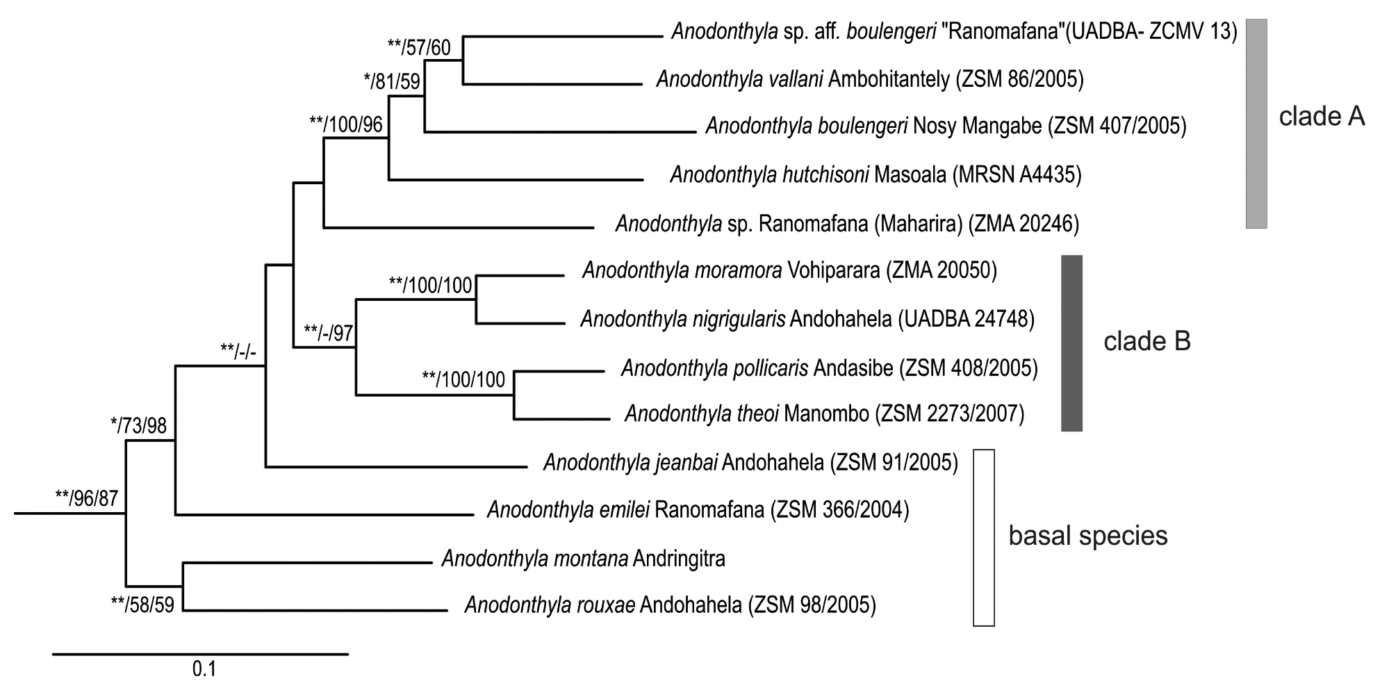 Animal phylogeny based on molecular data - My site Daot.tk