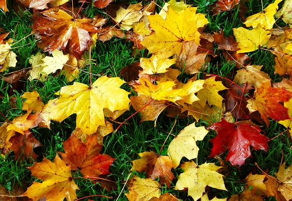 Image Result For Autumn Trees Leaves