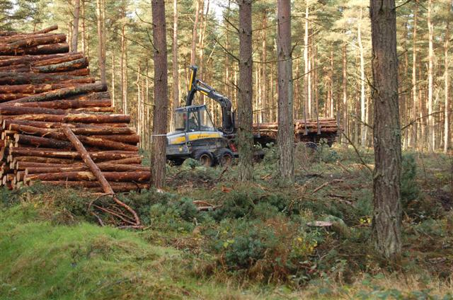 Devilla Forest - geograph.org.uk - 277989