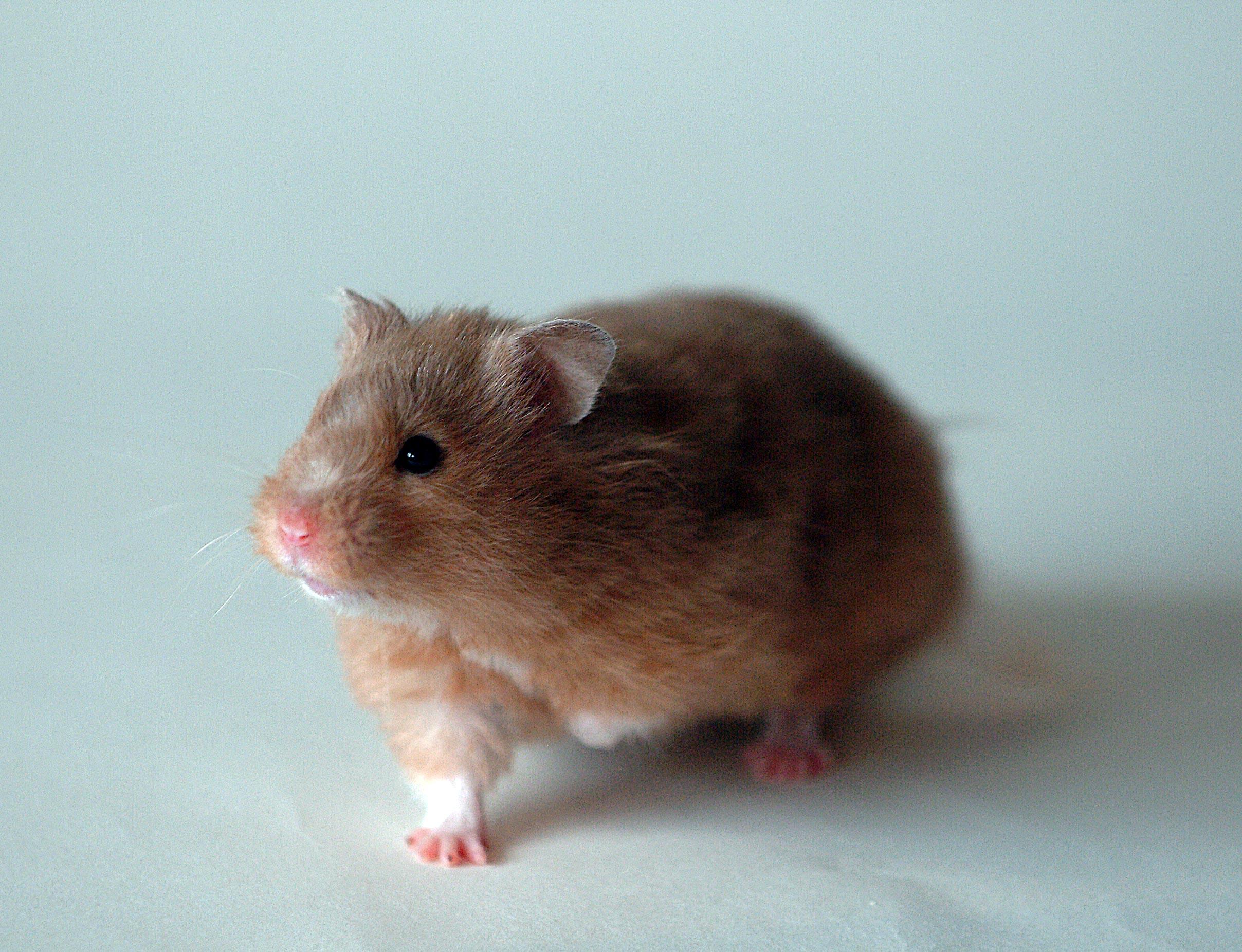 Loving your hamster.com