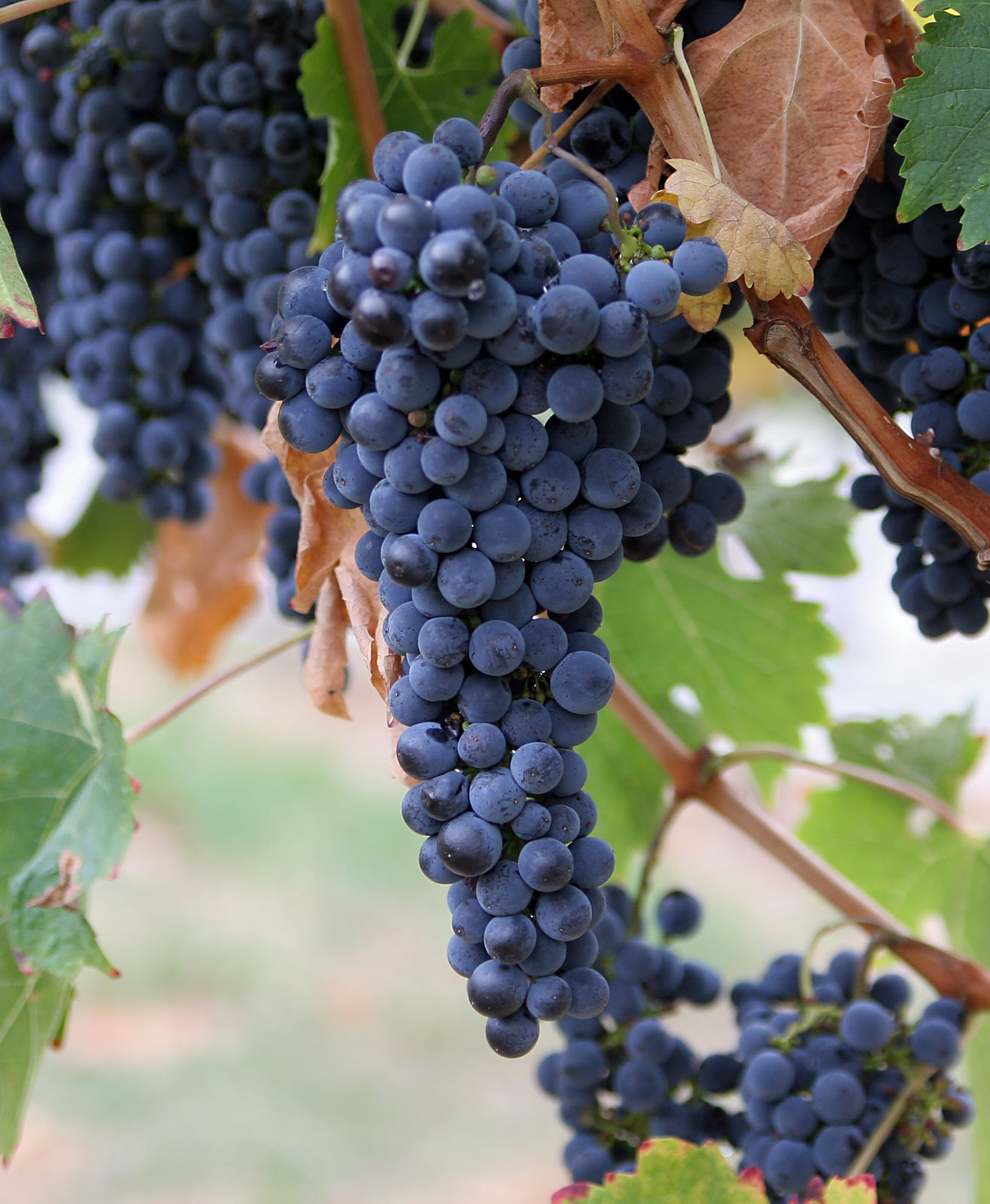 Commercial building grape concentrates, other products and waste from the wine industry
