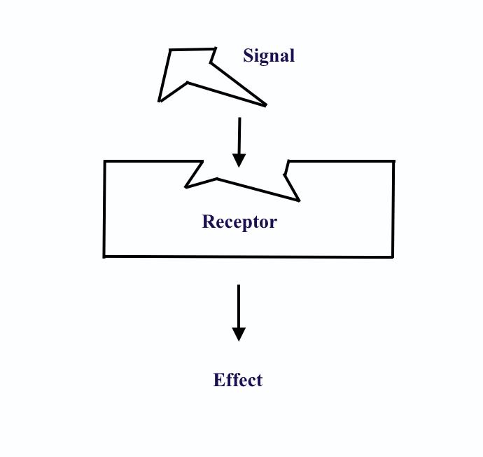 Hormone receptor - Wikipedia