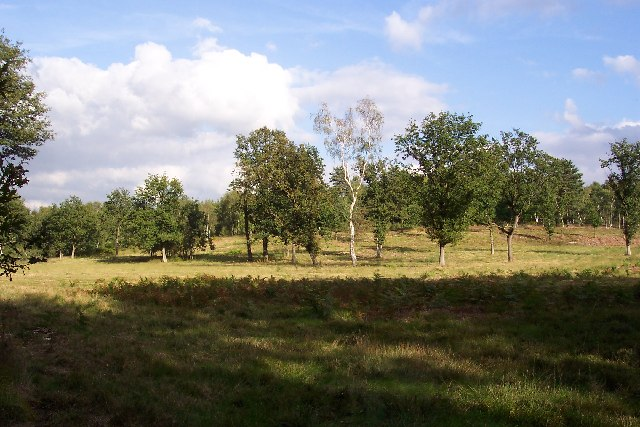 Jordan Hill, Whitmoor Common - geograph.org.uk - 57327