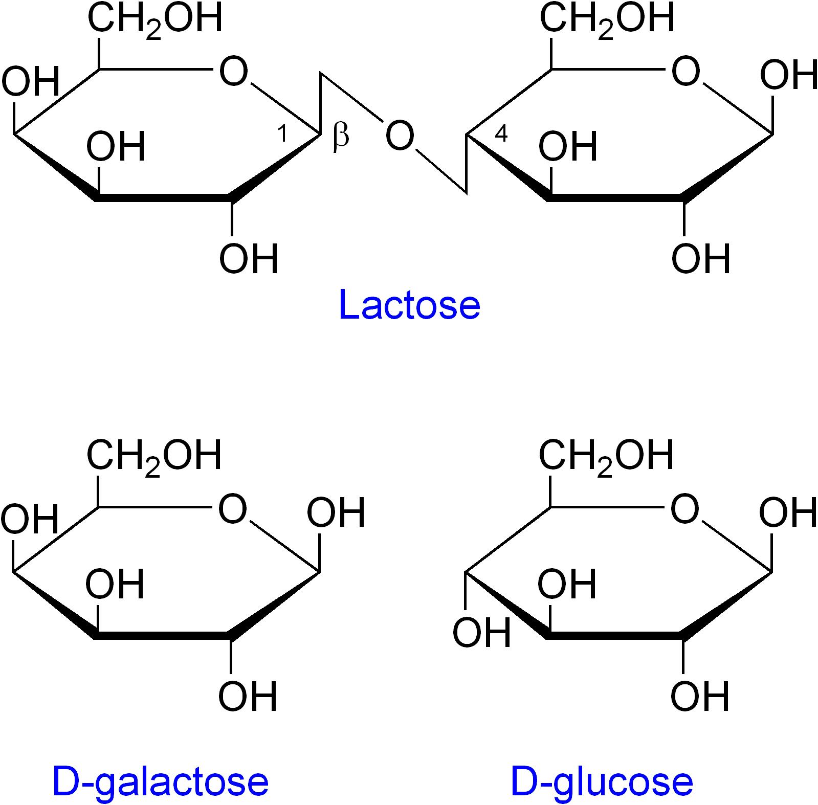lactose structure - photo #2