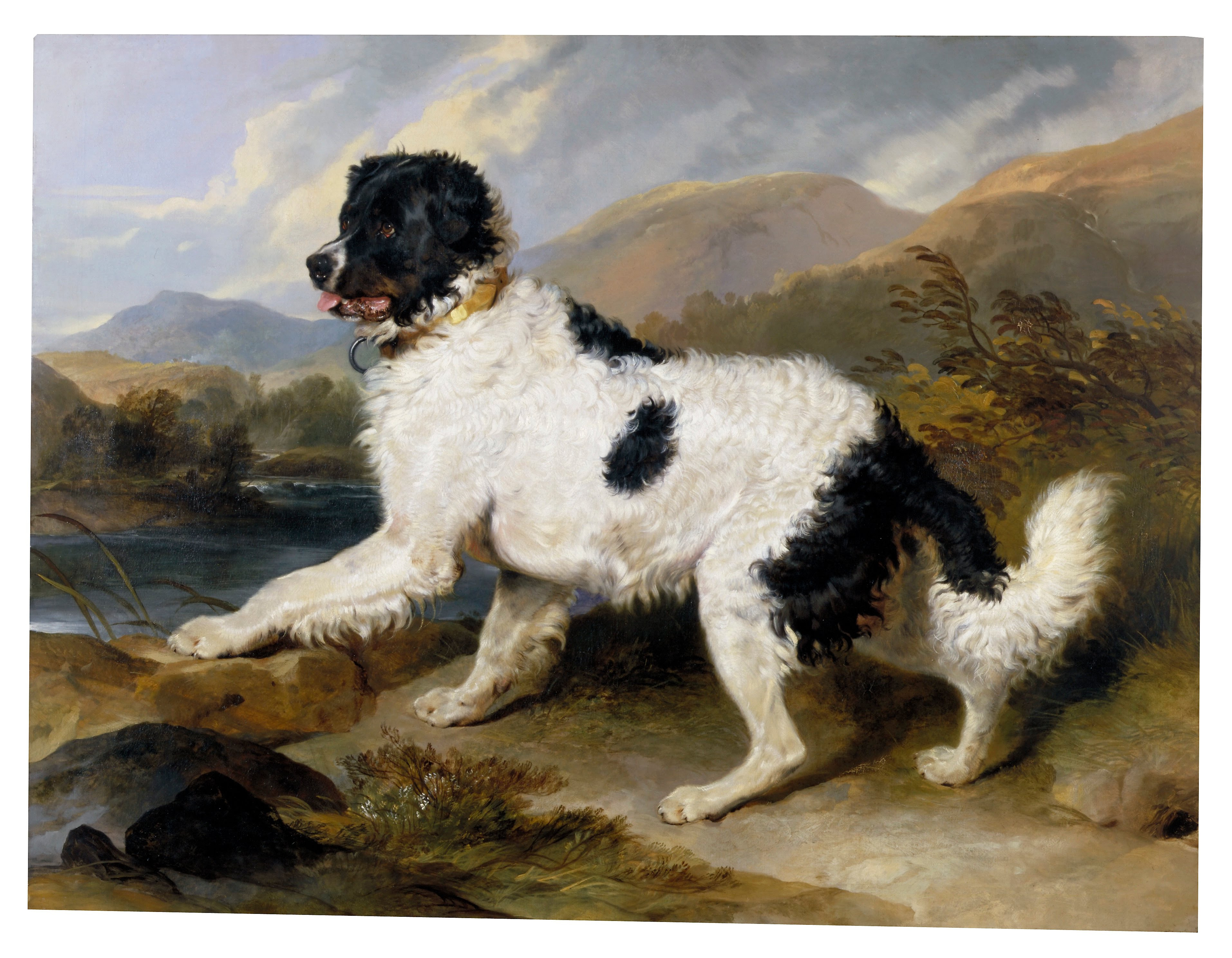 Dog Painting Portrait Black Background