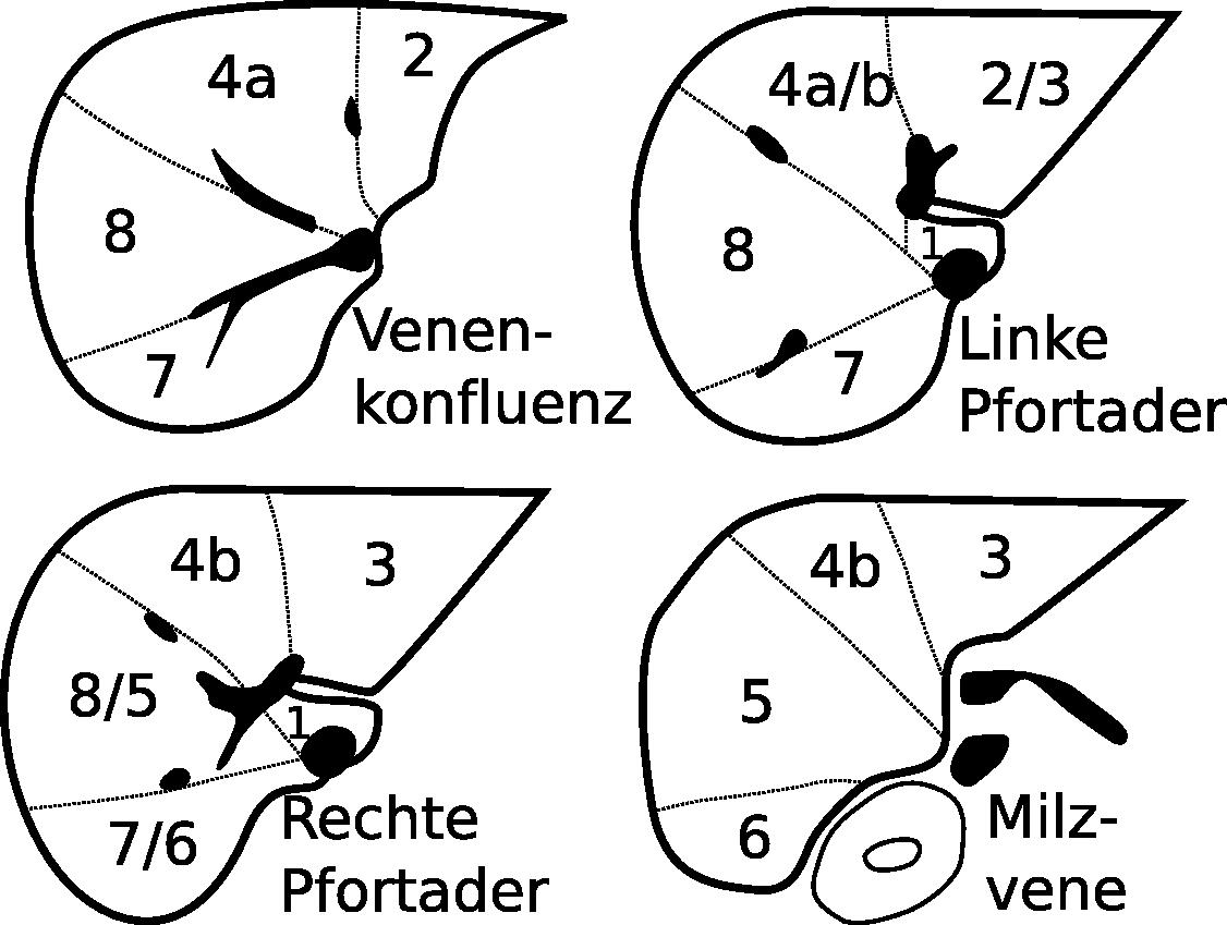 File:Lebersegmente.png - Wikimedia Commons