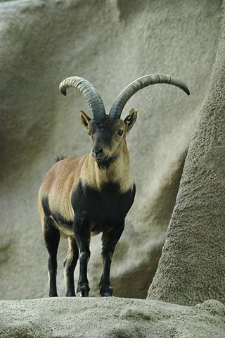 Lightmatter ibex