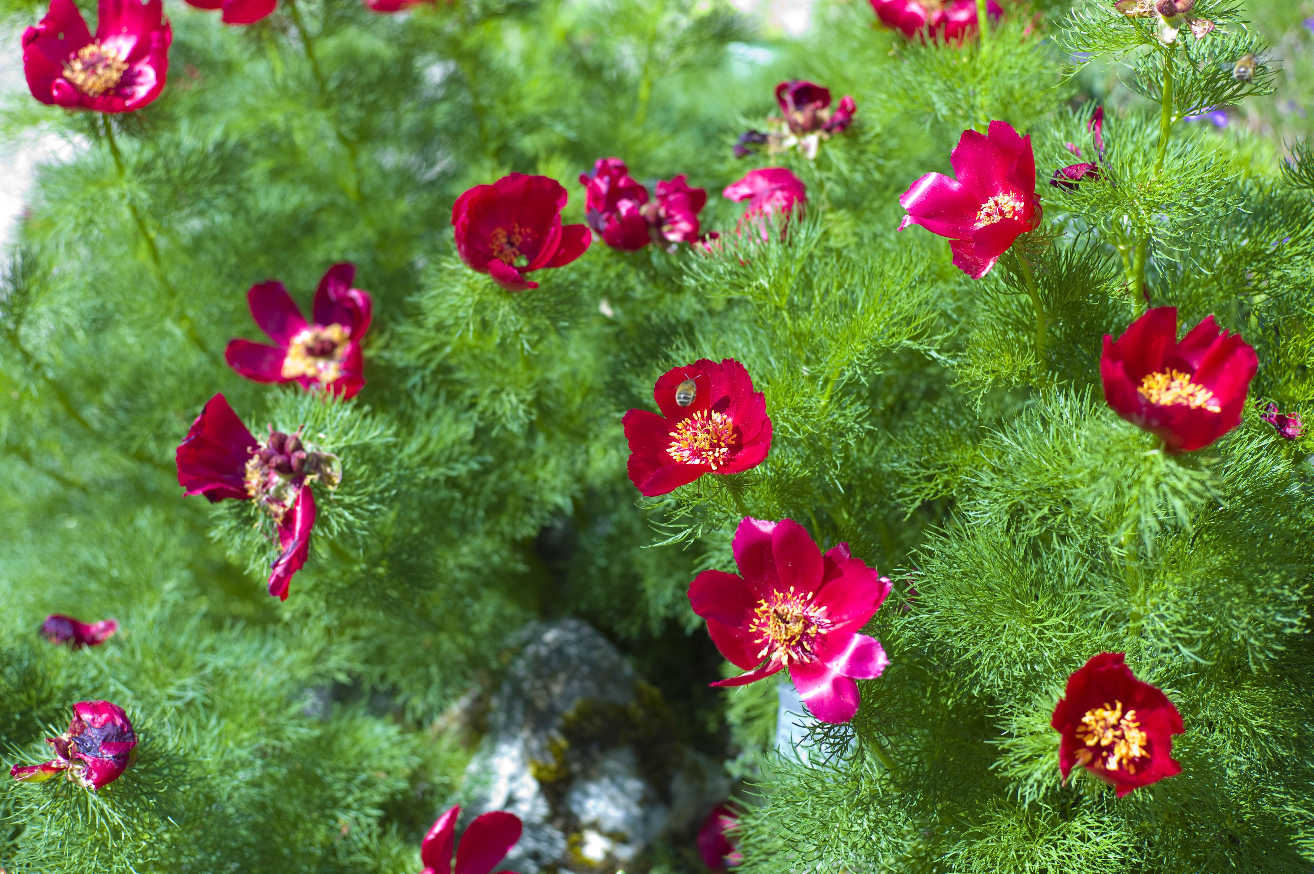 Ботанічний заказник Юницького — Вікіпедія