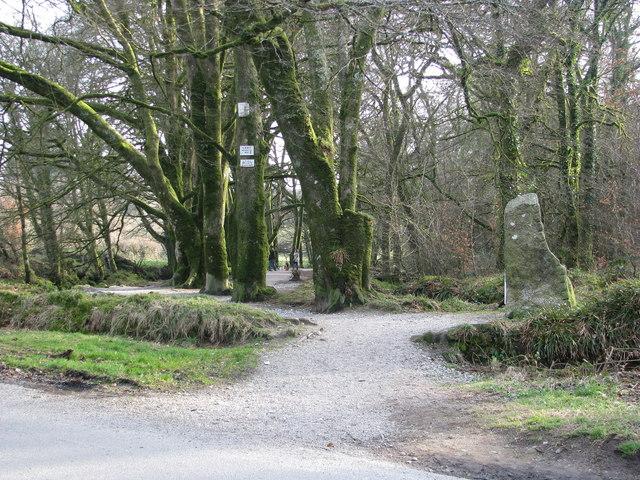 Path to Golitha Falls - geograph.org.uk - 2342227